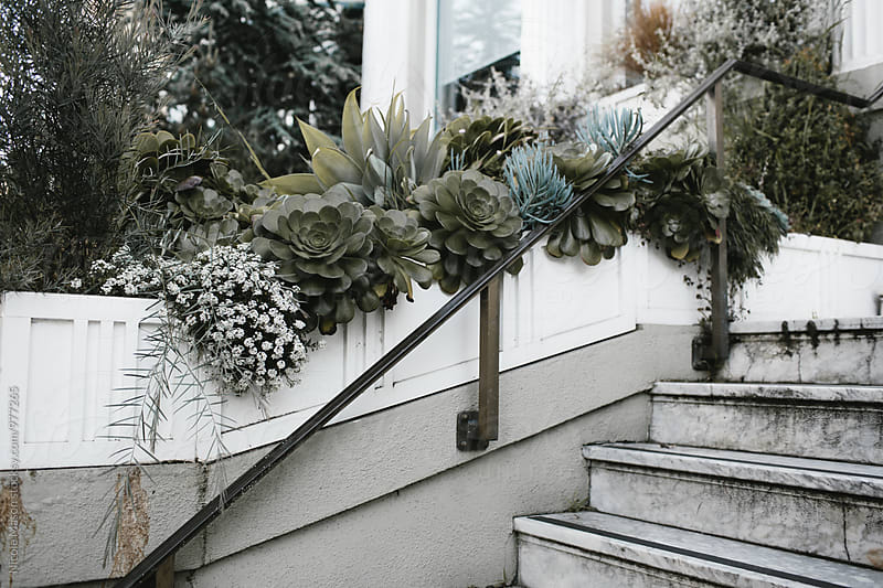 greenery and succulents in house garden by Nicole Mason for Stocksy United