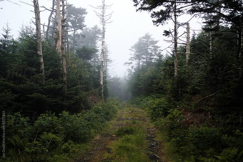 Foggy Service Road by Joe Dodd for Stocksy United