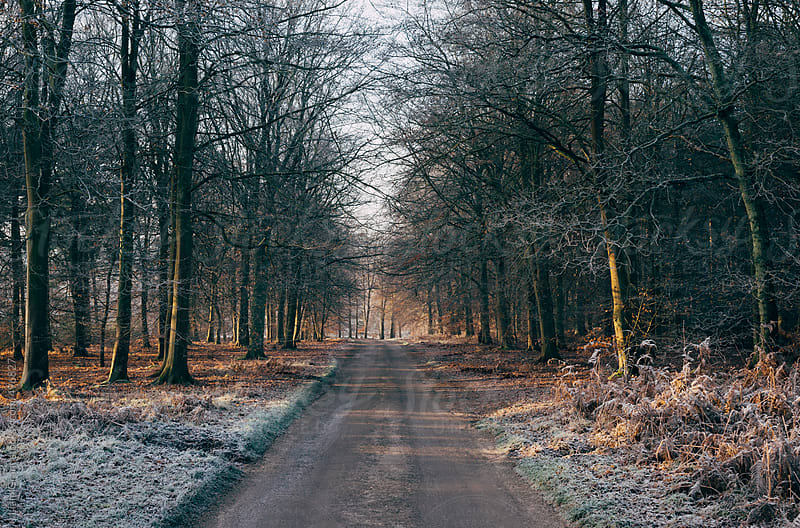 Frost covered remote country road through woodland.  by Liam Grant for Stocksy United
