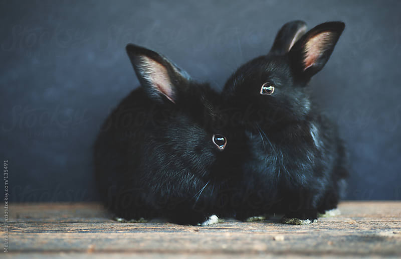 Baby Bunnies by Melanie DeFazio for Stocksy United