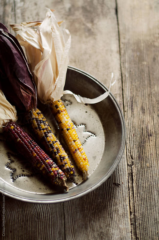 dried corn by Crissy Mitchell for Stocksy United