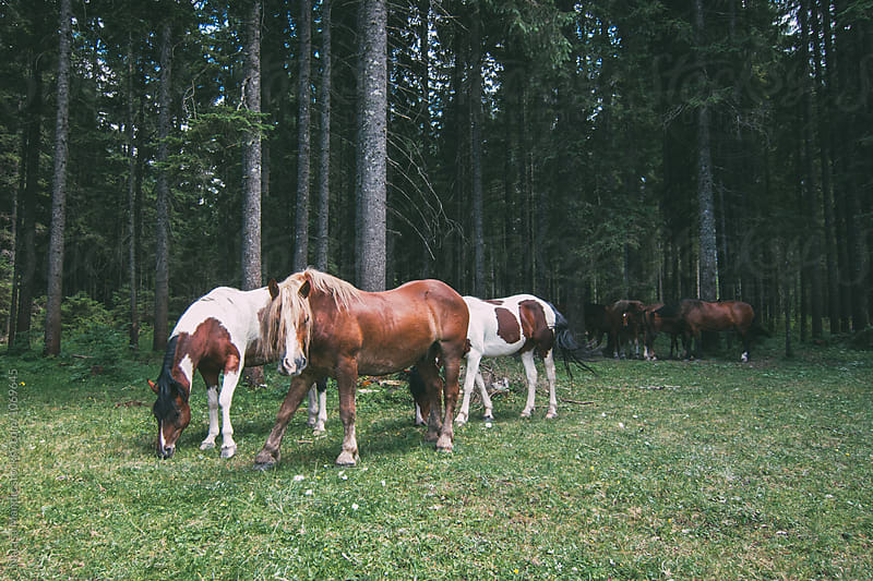 Wild horses in a forest by Nataša Mandić for Stocksy United