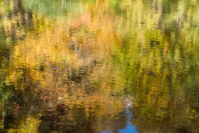 Reflection of fall foliage in a lake by Adam Nixon for Stocksy United