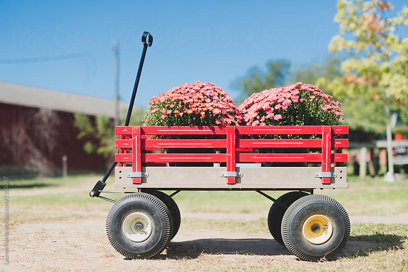 Red wagon full of flowers on a farm by Lauren Naefe for Stocksy United