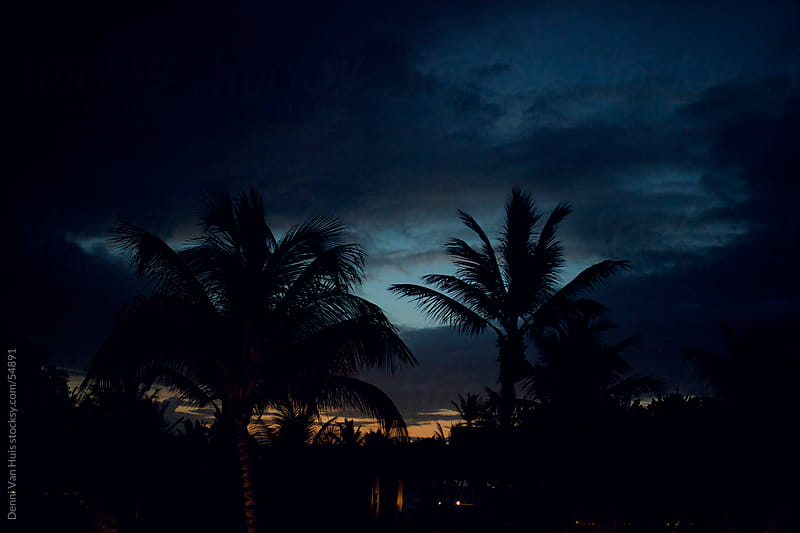 Silhouette of palm trees at first light by Denni Van Huis for Stocksy United