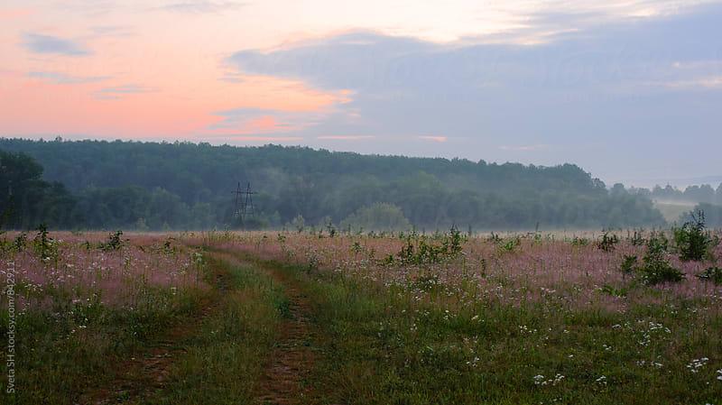 Meadow by Svetlana Shchemeleva for Stocksy United