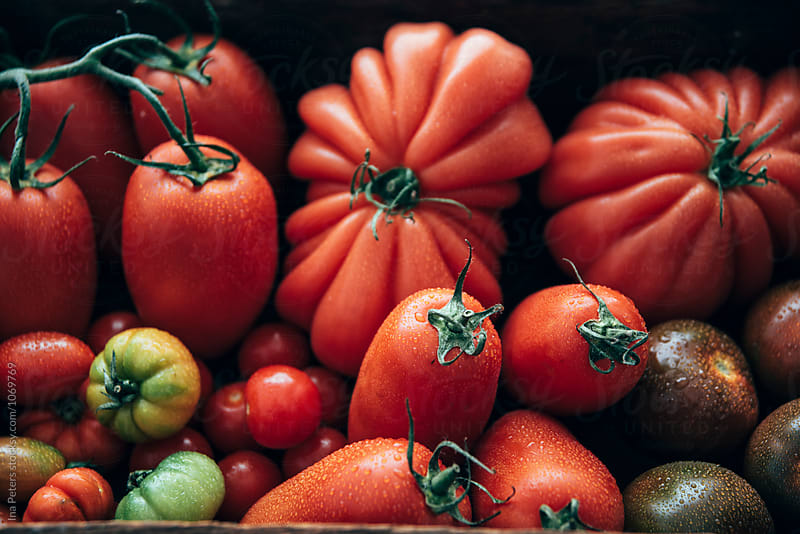 Food: Different types of tomatos, marinda, datterino, san marzano, kumato, plum tomato, bulls heart tomato by Ina Peters for Stocksy United