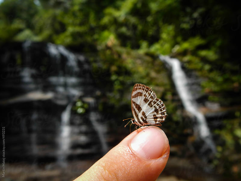 Butterfly on finger with waterfalls in background by Martin Matej for Stocksy United