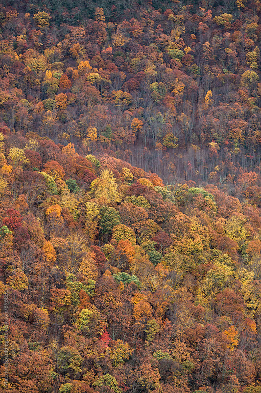Hilly forest tree tops in fall season by Matthew Spaulding for Stocksy United