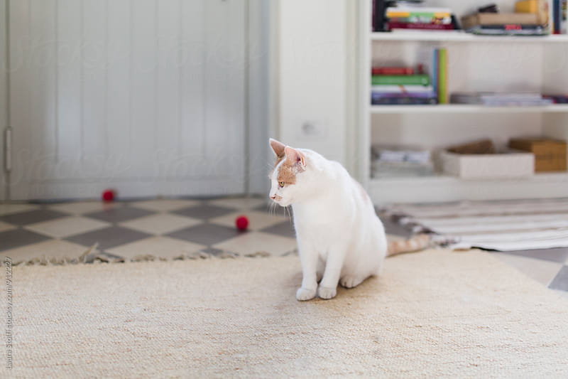 Cat sits close to ball toys in sunny room by Laura Stolfi for Stocksy United
