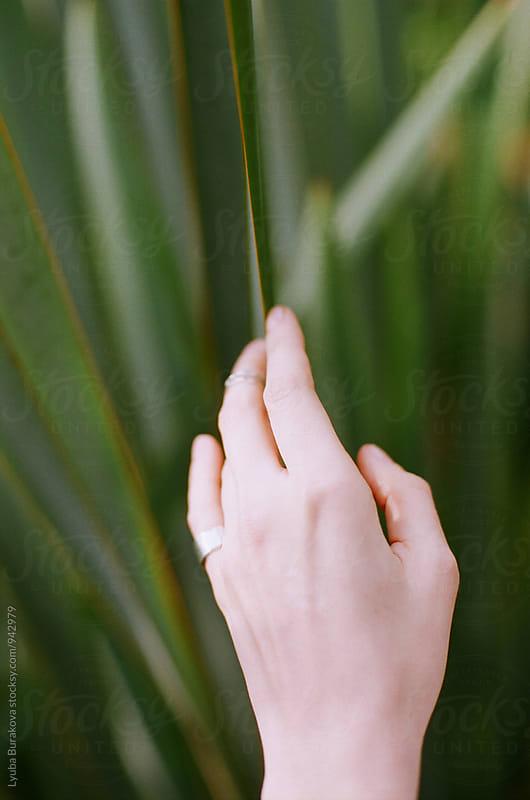 Woman touching a palm leaf by Liubov Burakova for Stocksy United