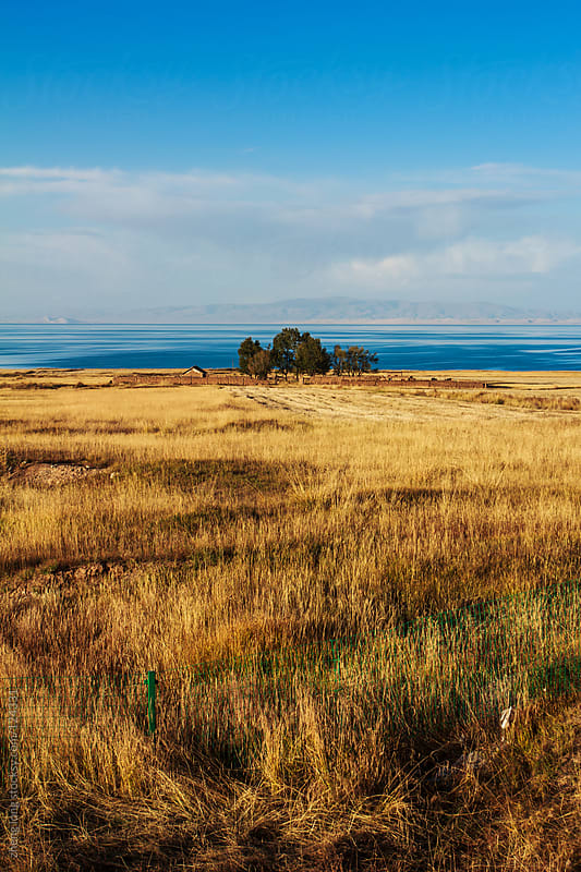 pasture beside Qinghai lake by zheng long for Stocksy United