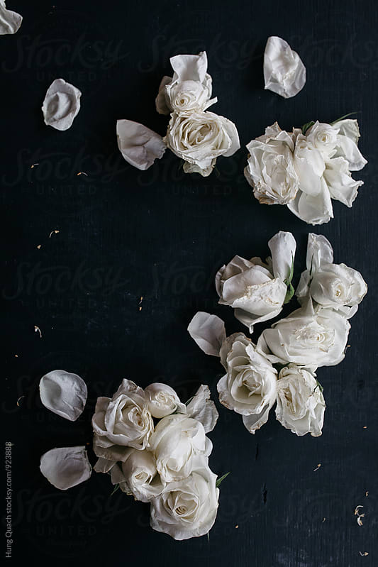 White Roses by Hung Quach for Stocksy United