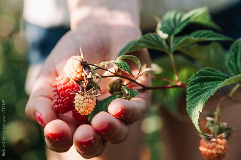 Close-up of a woman holding raspberries by Borislav Zhuykov for Stocksy United