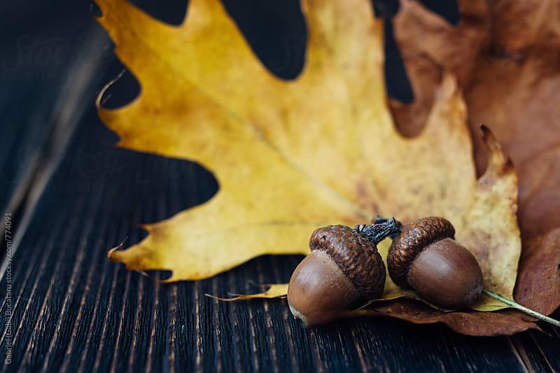 Oak leaves and two acorns by Gabriel (Gabi) Bucataru for Stocksy United