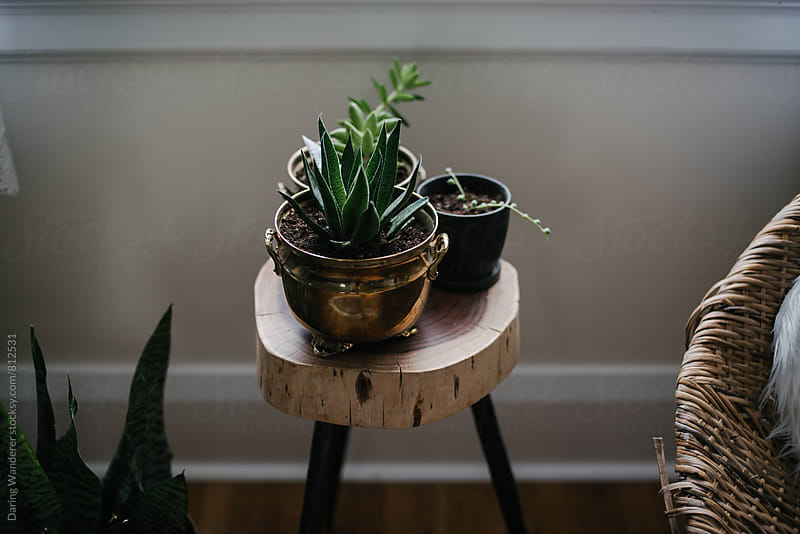 Succulent plants in copper and vintage planters in home by Daring Wanderer for Stocksy United
