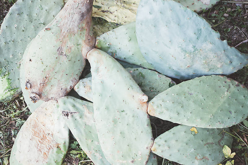 Succulent plants by Giada Canu for Stocksy United