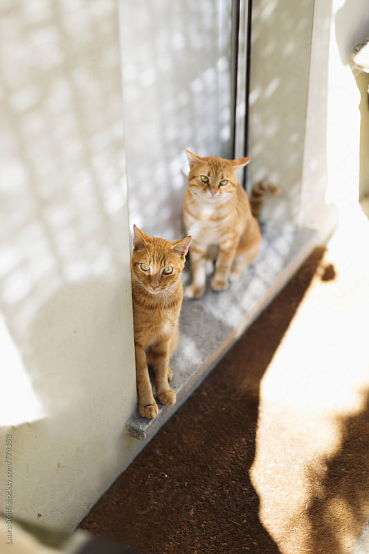 Two ginger cats sitting together on house door's threshold by Laura Stolfi for Stocksy United