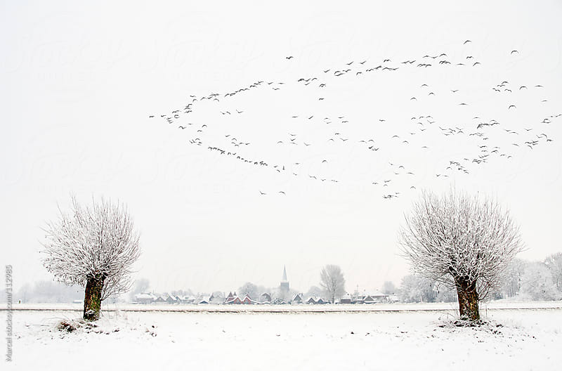 Dutch winter landscape with flying geese by Marcel for Stocksy United