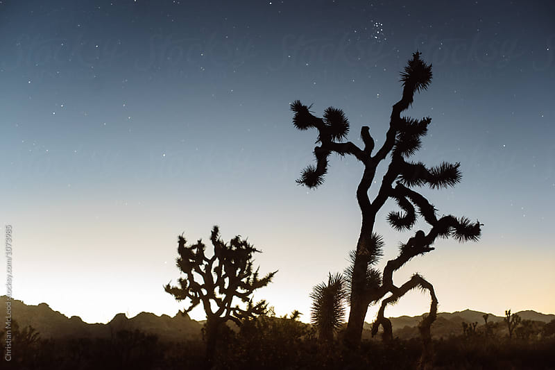 Desert shapes and an empty night's sky. by Christian McLeod for Stocksy United