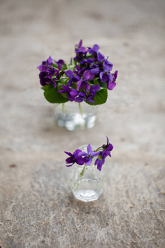 Wild violets in glass jars by Laura Stolfi for Stocksy United