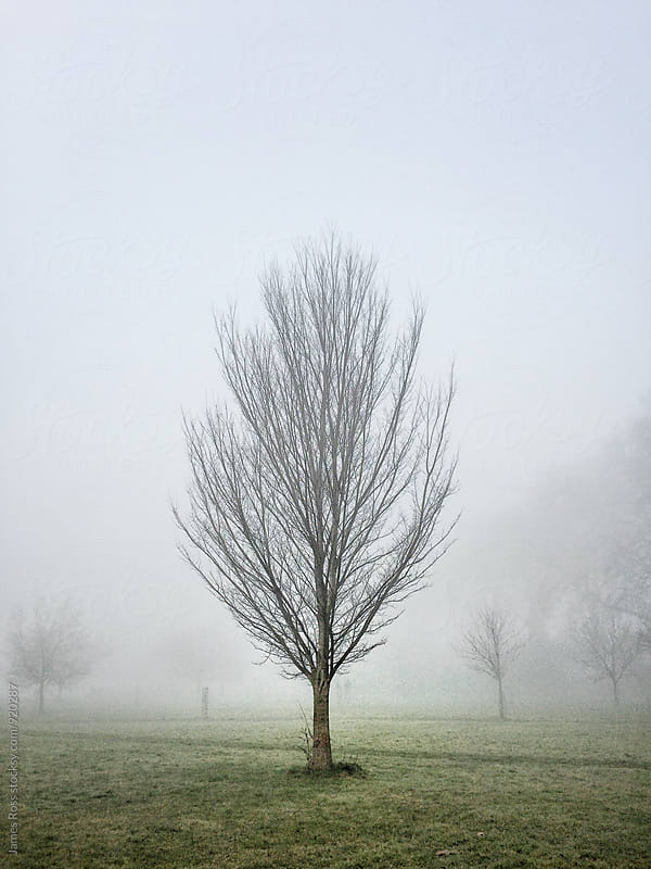 Public park shrouded in fog by James Ross for Stocksy United