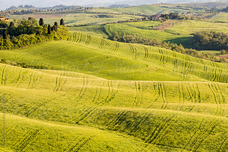 Farms in the fields of Tuscany by Marilar Irastorza for Stocksy United