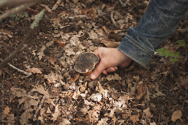 A hand picking up porcini mushroom in the forest by Beatrix Boros for Stocksy United