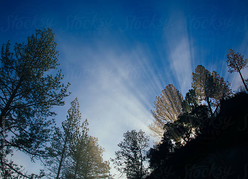 Sun rays and fog mixture with a vibrant blue sky at sunrise by Carolyn Lagattuta for Stocksy United