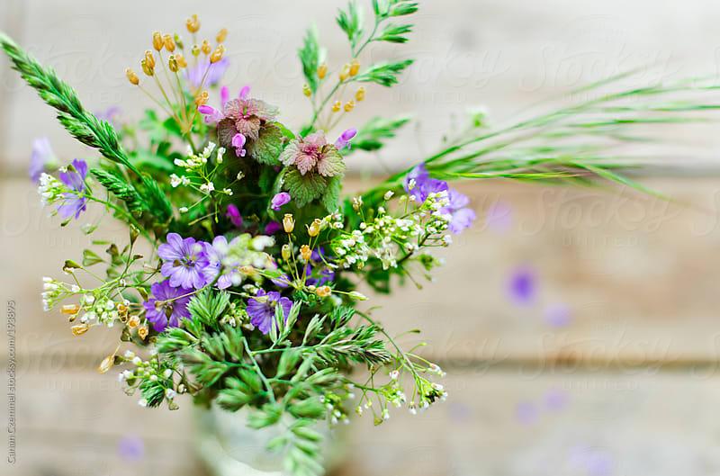 bunch of field flowers by Canan Czemmel for Stocksy United