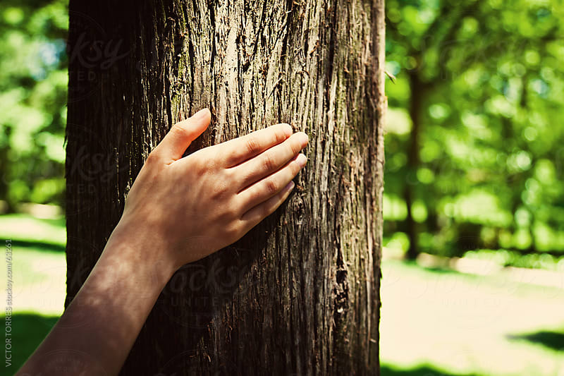 Hand stroking a tree trunk by Victor Torres for Stocksy United