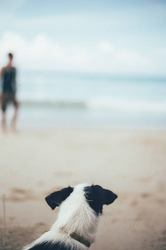 Dog looking at the sea  by Studio Firma for Stocksy United