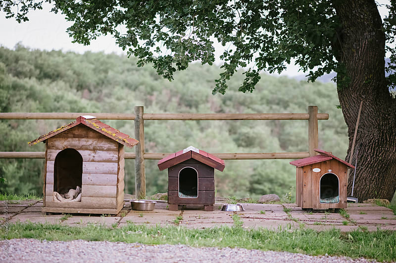 Three dog's houses by WAVE for Stocksy United