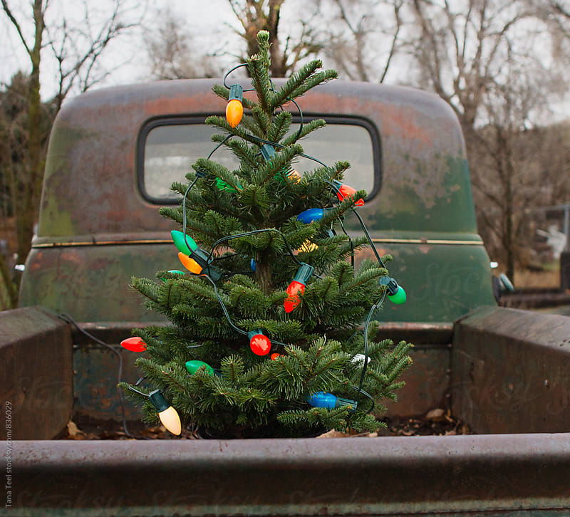 small Christmas tree in back of old pickup by Tana Teel for Stocksy United