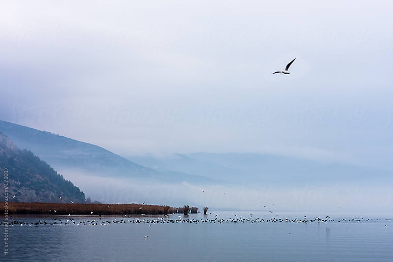 Fog over Pamvotis Lake at Ioannina, Greece by Helen Sotiriadis for Stocksy United