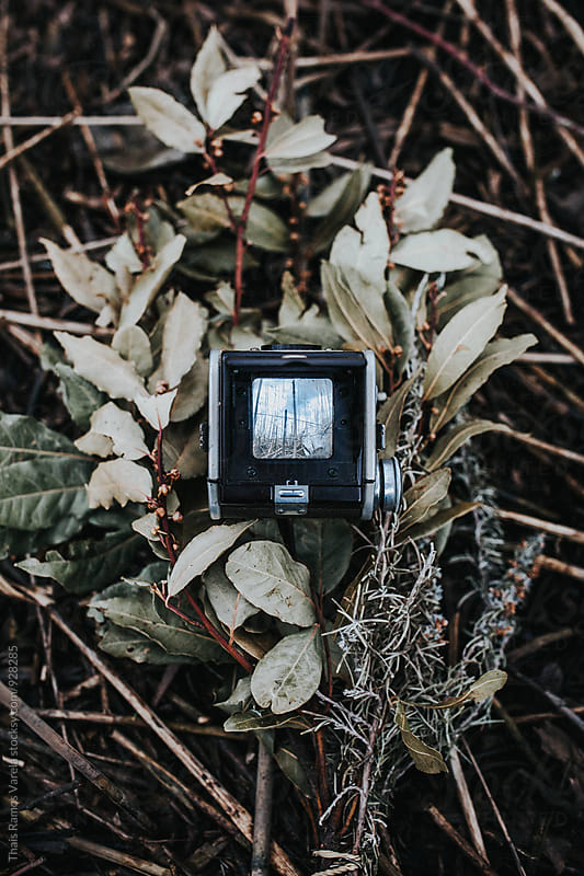 camera above leafs by Thais Ramos Varela for Stocksy United