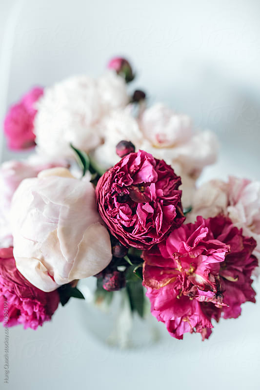 A bouquet pf peonies by Hung Quach for Stocksy United