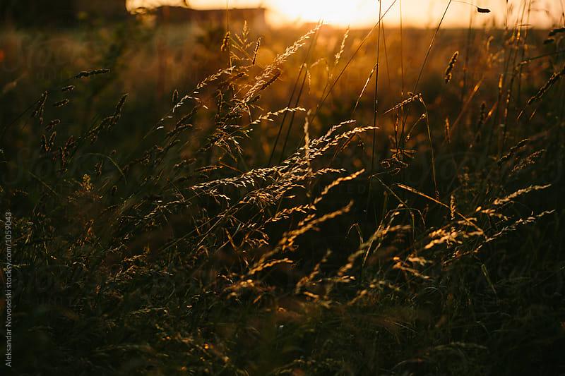 Agriculture field by sunset by Aleksandar Novoselski for Stocksy United