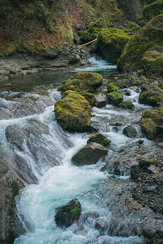 Creek in the Pacific Northwest by Shelly Perry for Stocksy United