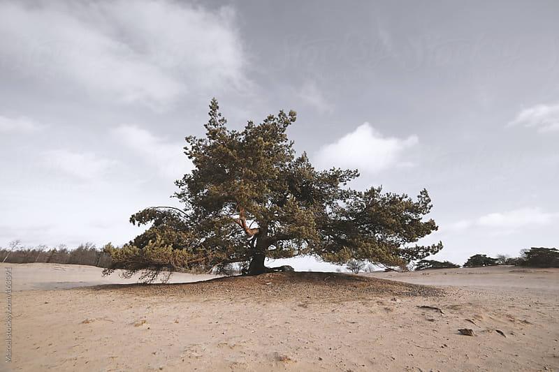 Big bonsai by Marcel for Stocksy United
