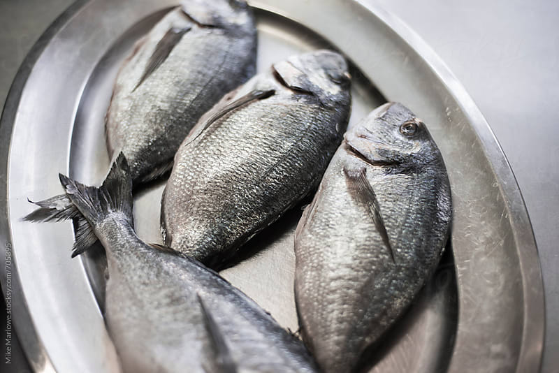 Silver plate with freshly caught fish ready for cooking by Mike Marlowe for Stocksy United