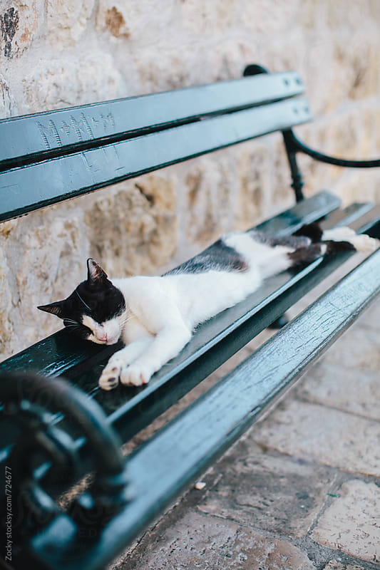 White and black cat sleeping on a green bench by Zocky for Stocksy United