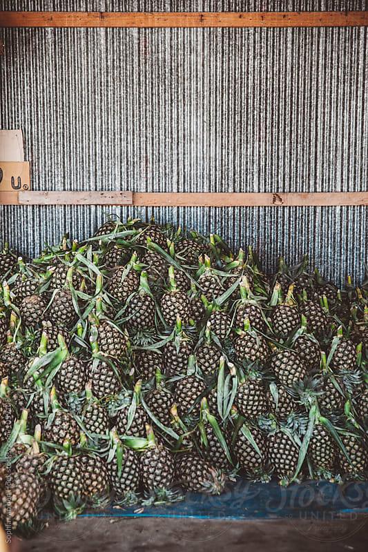 Pineapples on market by Sophia van den Hoek for Stocksy United