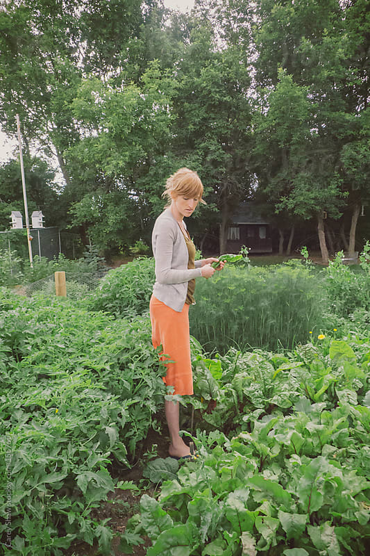 Woman picking fresh food from garden by Carey Shaw for Stocksy United