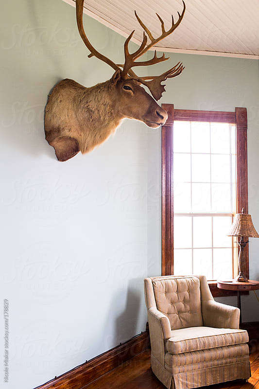 Deer head mounted on a wall by Nicole Mlakar for Stocksy United