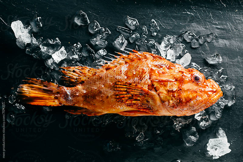 Scorpion fish still life. by mee productions for Stocksy United