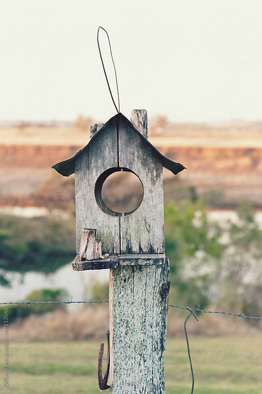 birdhouse with a view by Gillian Vann for Stocksy United