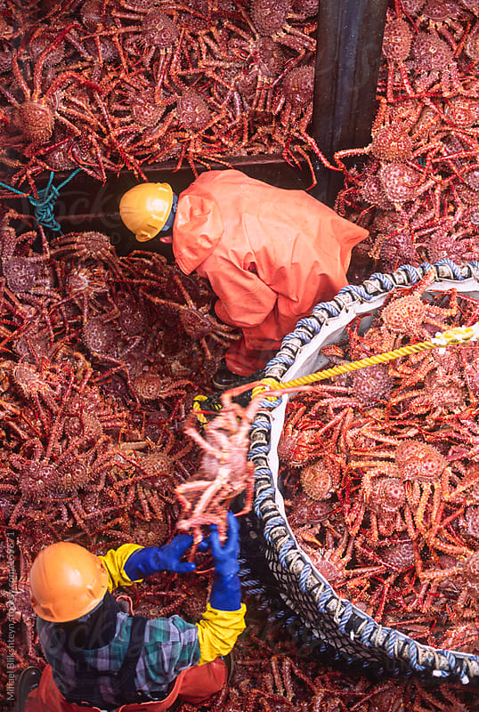Dock workers offloading Golden king crab from a fishing vessel by Mihael Blikshteyn for Stocksy United