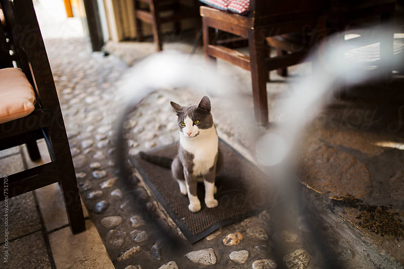 A cat outside a coffee shop by Maja Topcagic for Stocksy United