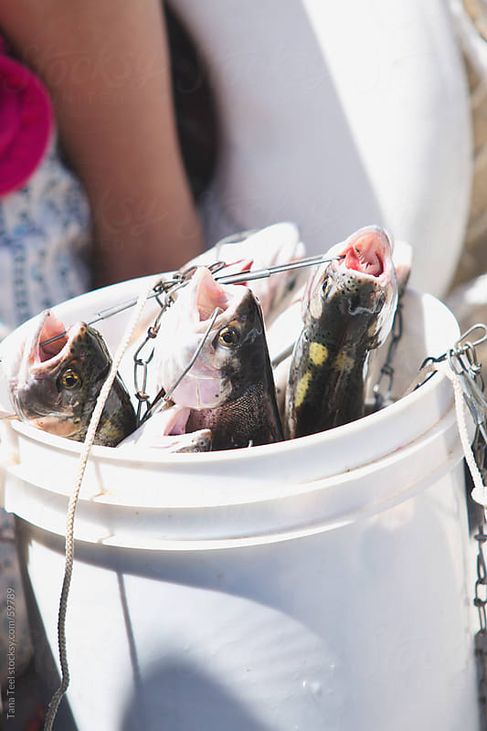 Freshly caught trout held in a bucket by Tana Teel for Stocksy United